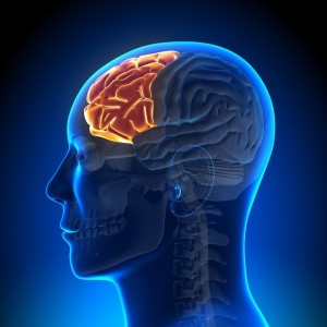 Coaching Go Caroline Carlicchi Formation neurosciences